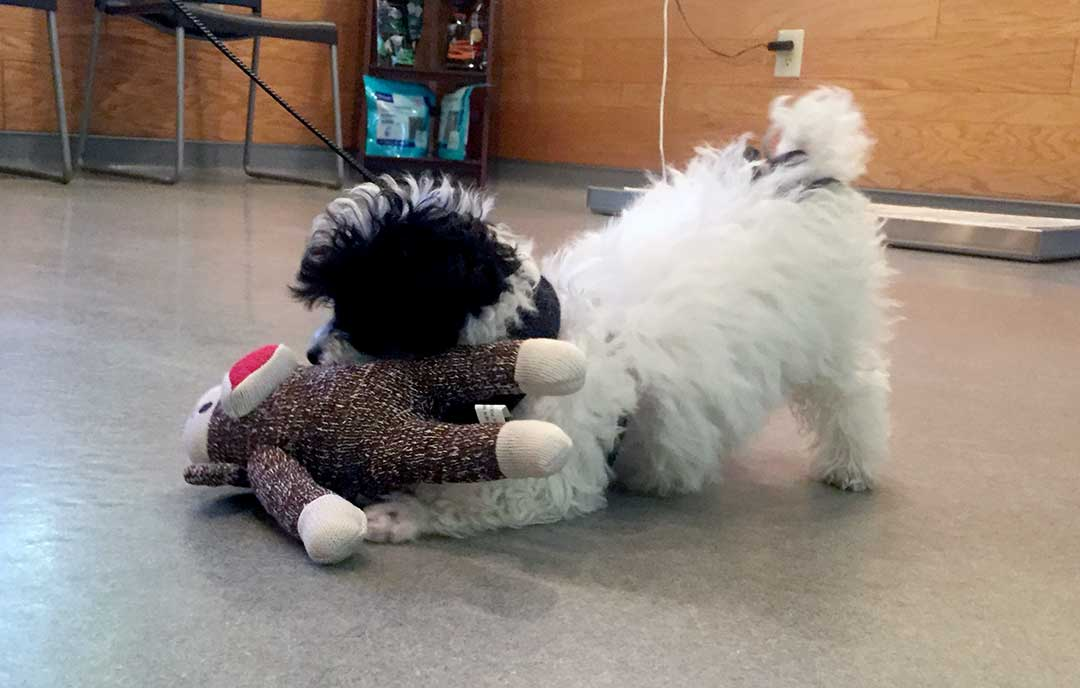 Cute Dog Playing with Plush Toy